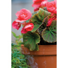 Ceramo 3-3/4 In. H. x 4-1/2 In. Dia. Terracotta Clay Standard Flower Pot Image 2